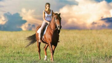 Best Bra For Horse Riding